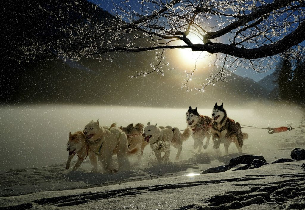 Mushing behind a team of dogs would be an unforgettable part of your Andorra experience.