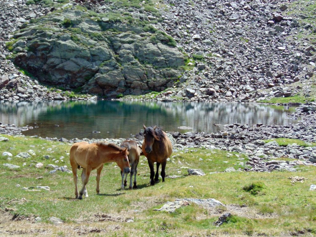 Horses grazing beside a mountain lake is a somewhat common sight in Andorra.