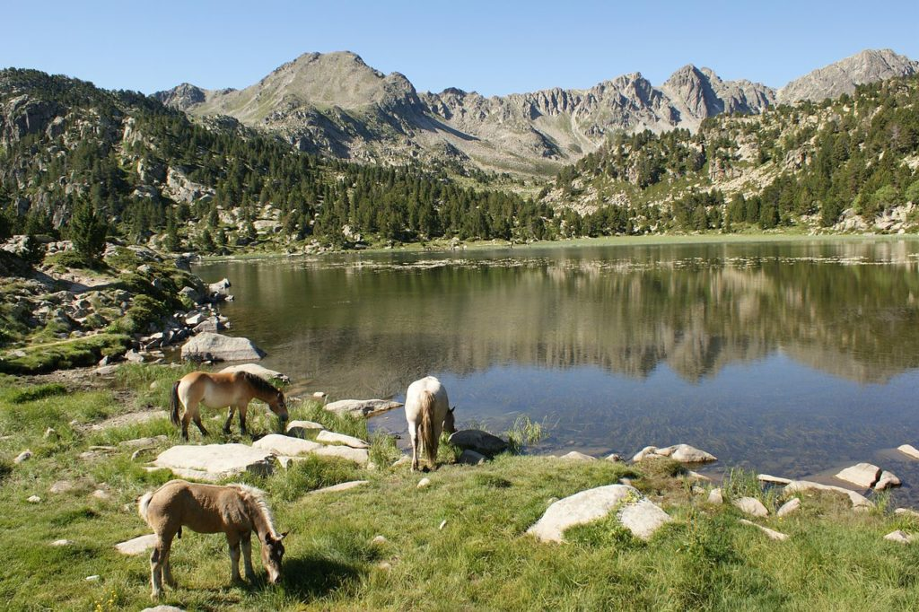 Free-ranging horses graze beside a lake in Andorra.