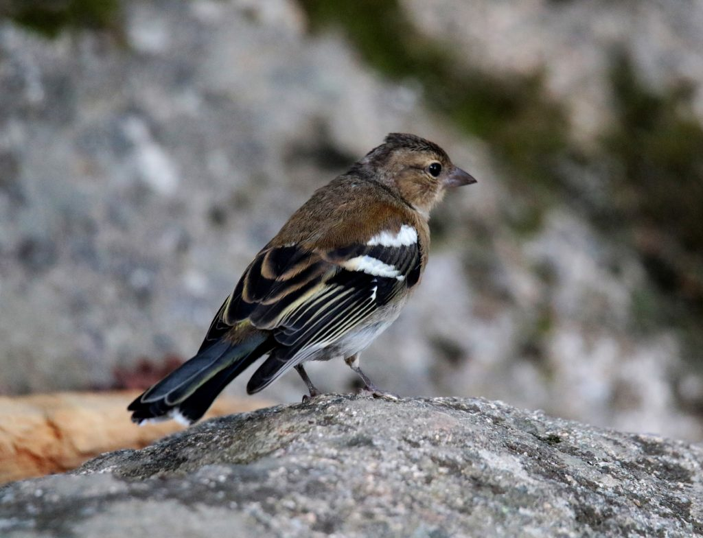 Bird watching attracts a passionate following to Andorra in search of rare mountain bird species.